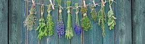 Ervas específicas para o desenvolvimento mediúnico